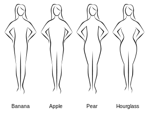 300px-Bodyshapes.svg