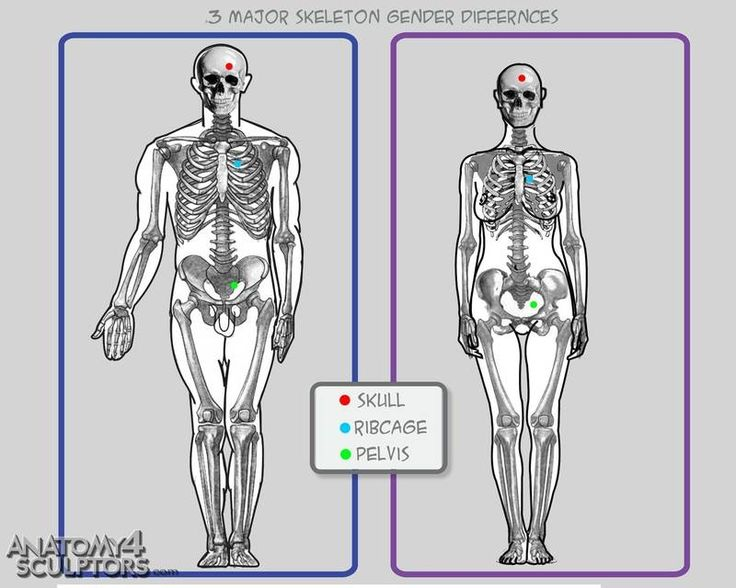 the anatomical and physiological reasons for differences in, Skeleton