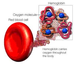 anemia_icon