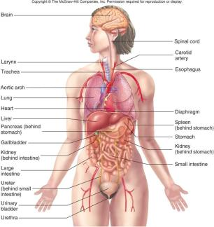 aorgans_of_the_body1317899201155