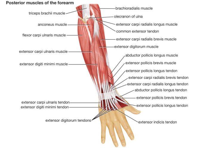 Arm Wrestling – femuscleblog