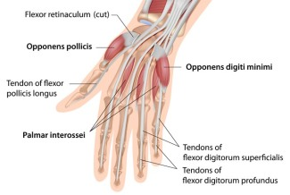 hand-finger-tendon-injury