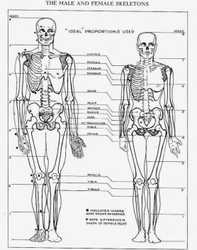 male-and-female-skeleton8