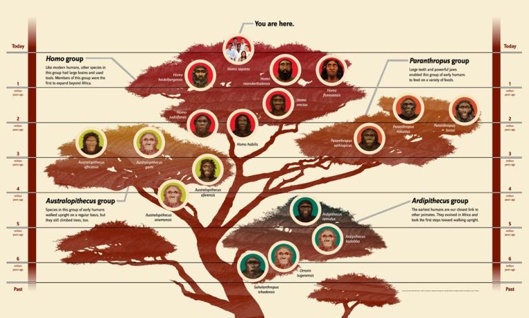 2 3 1_Family Tree 50_1000