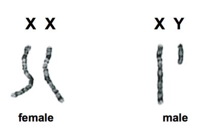 sexgenesthey