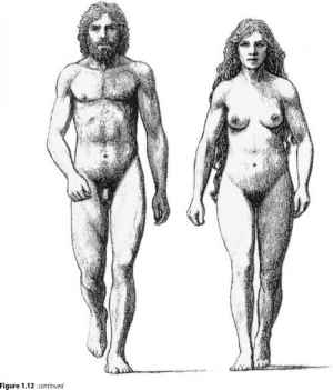 2028_4_16-sexual-dimorphism-humans