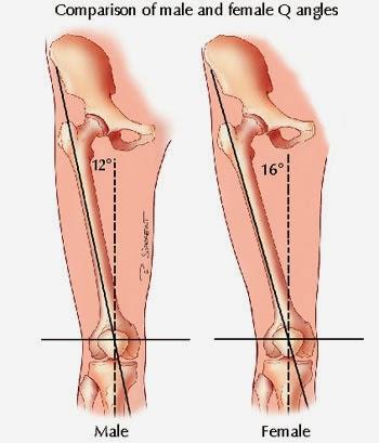 knee angles