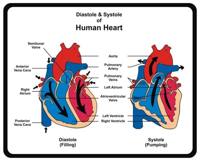 Diastolic-and-Systolic-Blood-Pressure