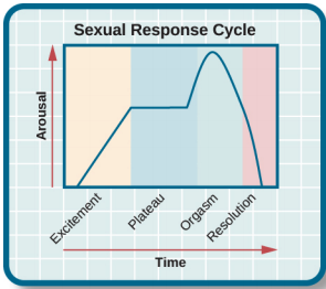 sexual_response_cycle