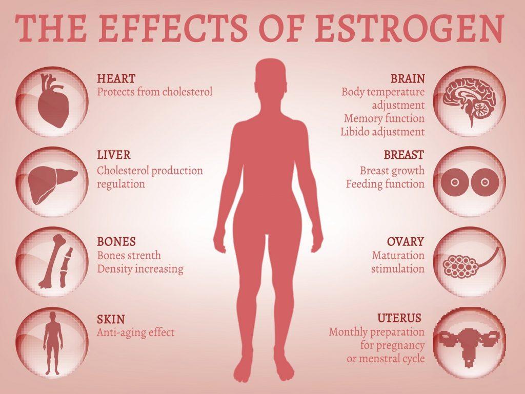 what-is-estrogen2-1024x769